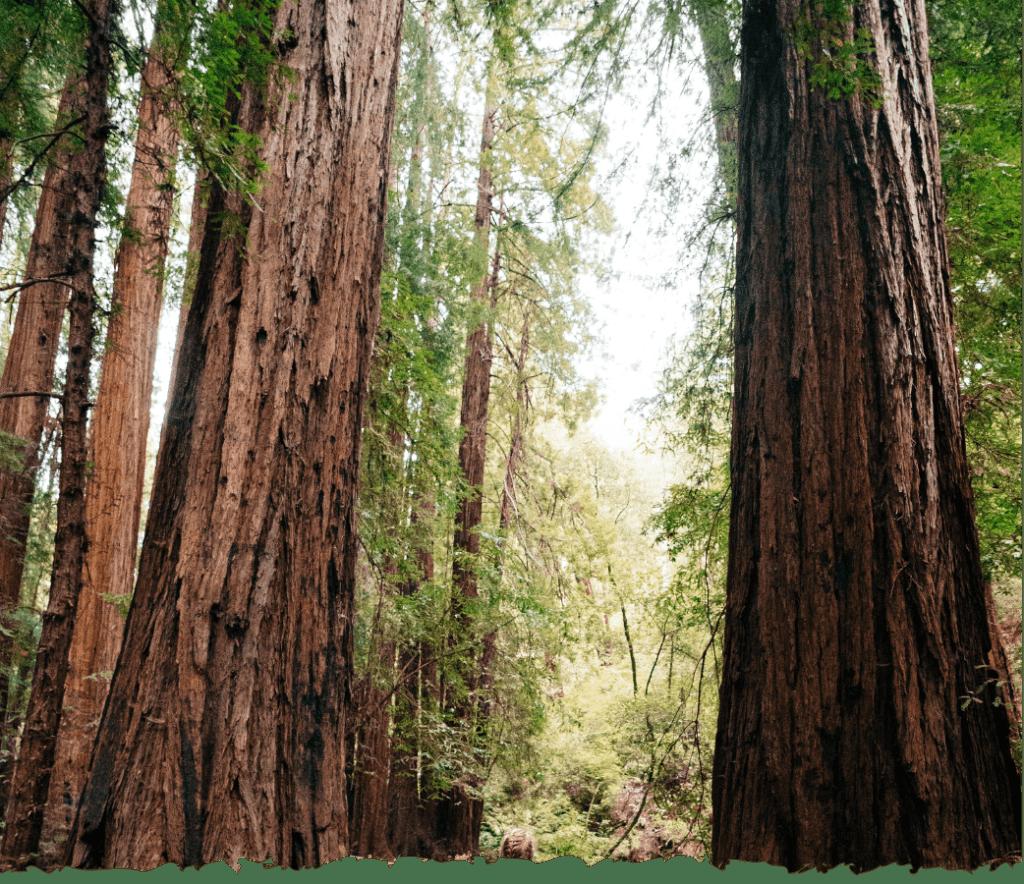 Tree Profile Image - Compressed